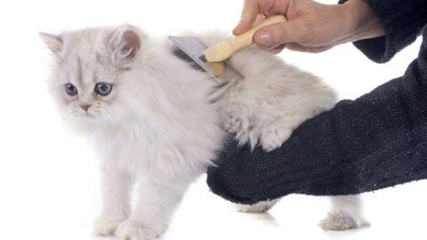 Как правильно выбрать расческу для кошки
