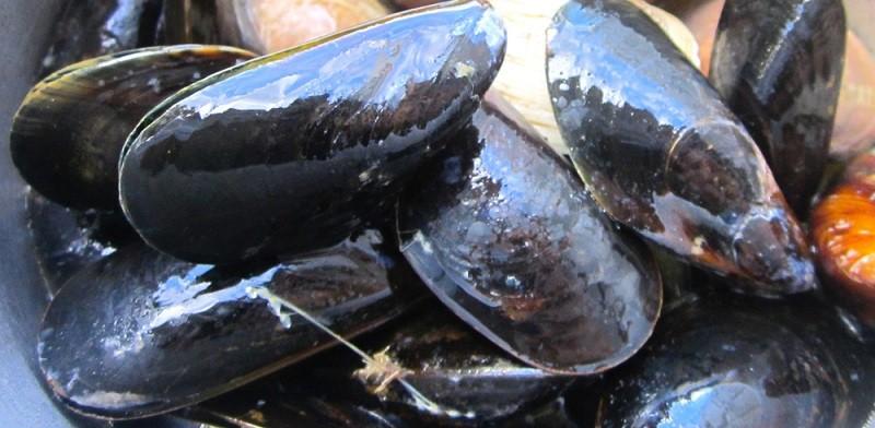 Моллюски и мидии