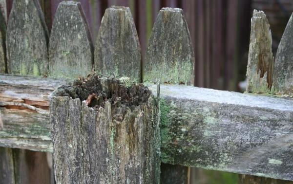 Старый гнилой деревянный забор
