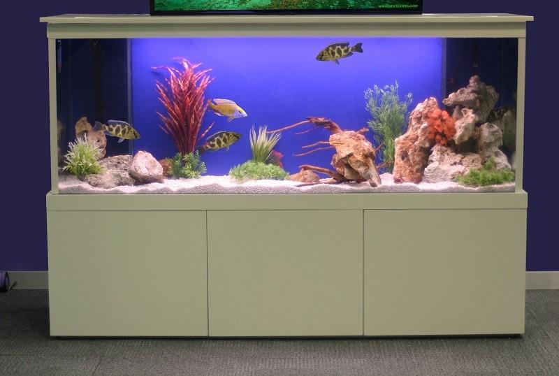 Прямоугольный аквариум в интерьере