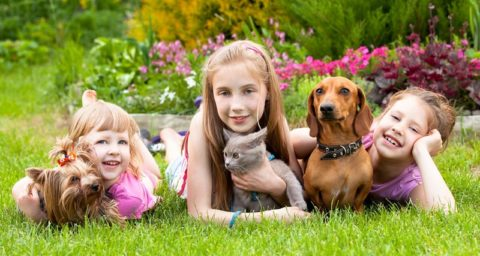 Влияют ли домашние животные на здоровье детей?