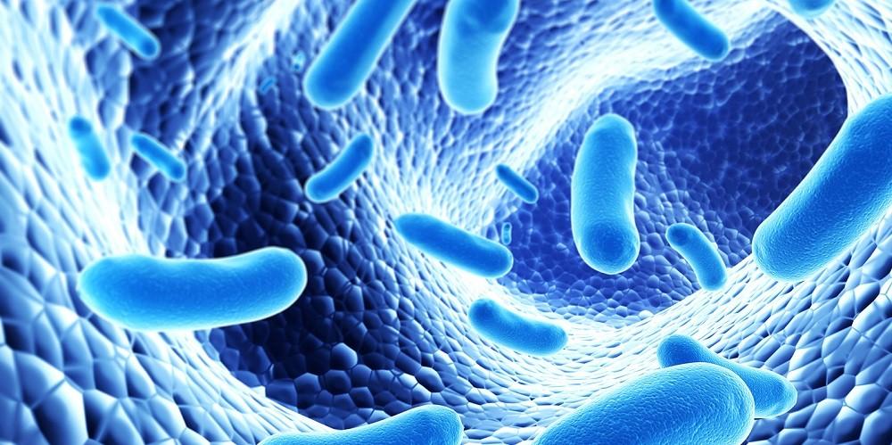Пробиотики помогают предотвратить и могут лечить рак толстой кишки
