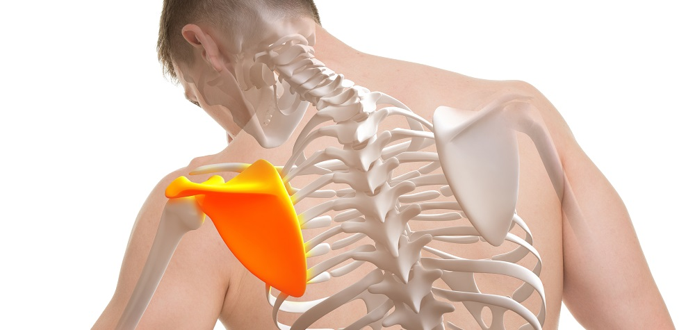 Боль в лопатке - причины, лечение