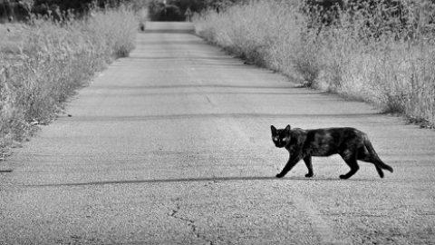 Тест: вы суеверны?