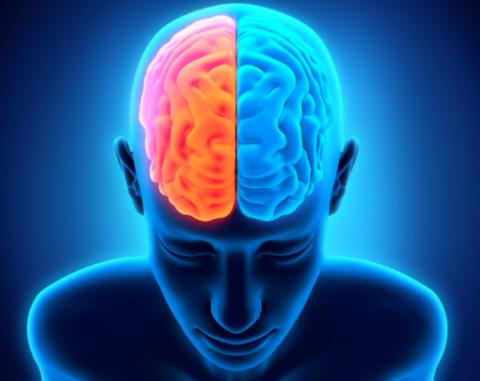 Тест: какое полушарие мозга у вас работает лучше?