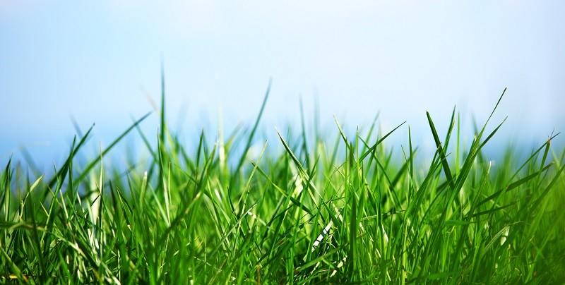 Почему трава зеленого цвета