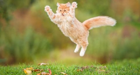 Как кошки могут помочь в лечении ВИЧ