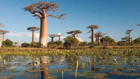 Интересные факты о Мадагаскаре