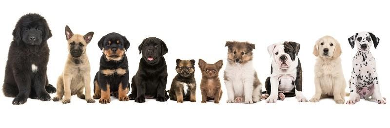 5 интересных фактов о собаках