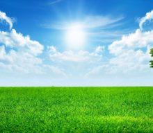 Почему трава зеленая с точки зрения физики, химии, для детей