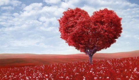 Как узнать любит ли тебя человек? Как это понять?