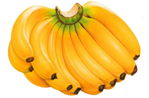 Бананы: польза и вред, противопоказания и калорийность