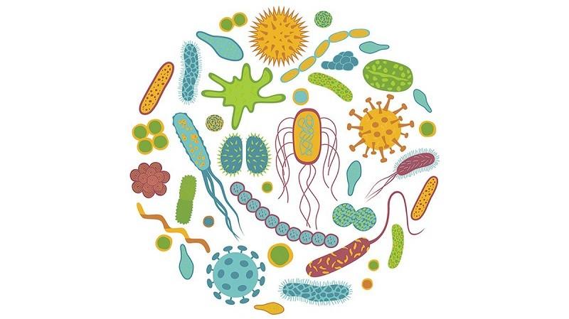 Пробиотики полезны и для печени