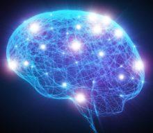 Семь интересных фактов о человеческом мозге