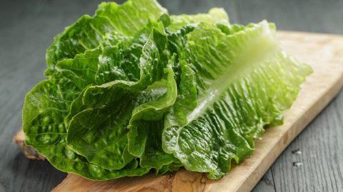 Салат ромэн: полезные свойства, калорийность, пищевая ценность