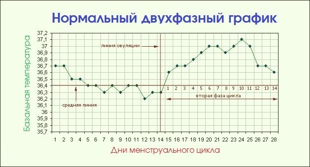 Двухфазный график базальной температуры