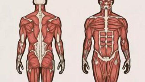 Тест: вы хорошо знаете свой организм?