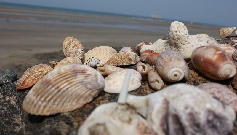 Оман, пляж ракушек