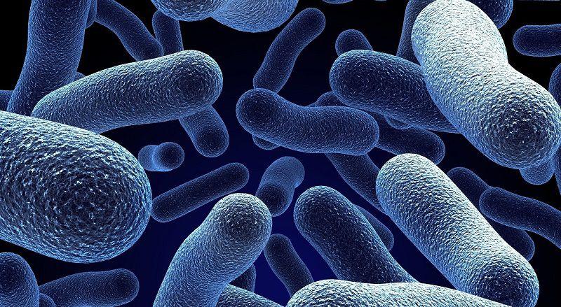 Пробиотики, пребиотики и синбиотики