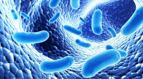 Пробиотики для кишечника — список, цены, что такое пребиотики и синбиотики