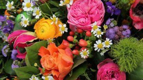 Женский тест: на какой вы похожи цветок?