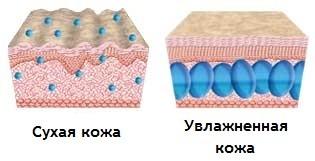 сухая и увлажненная кожа
