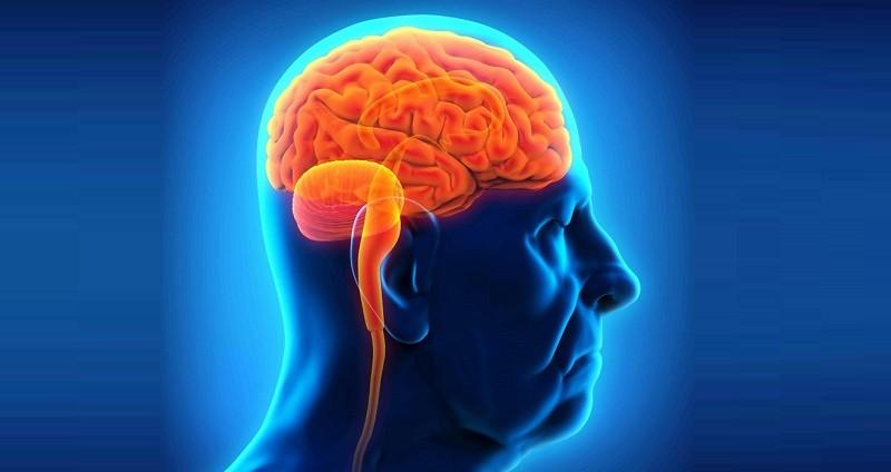 Черника предотвращает потери памяти и другие изменения, связанные с возрастом