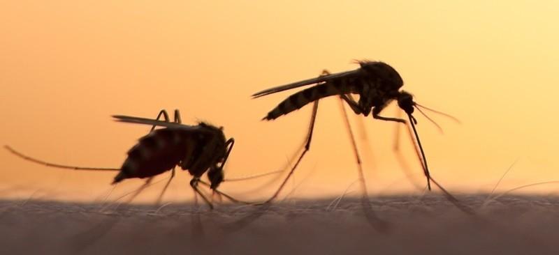 Малярийные комары на коже