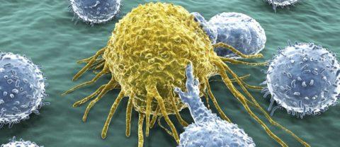 Ученые изучают, как этанол, содержащийся в вине убивает раковые клетки