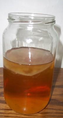 Чайный гриб, как вырастить в домашних условиях