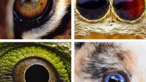 Тест: узнай животное по глазам