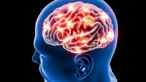 15 продуктов для улучшения работы мозга