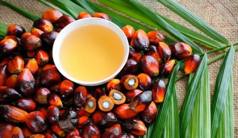 Пальмовое масло: вред и польза, применение